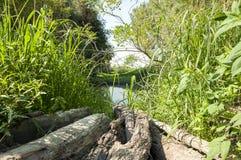 Lago nascosto e tronco asciutto Fotografie Stock Libere da Diritti