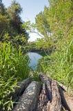 Lago nascosto e tronco asciutto Fotografia Stock