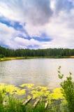 Lago natural del bosque con pasatiempos públicos arenosos artificiales de la playa gratis Suburbio residencial de Moscú, distrito Fotografía de archivo