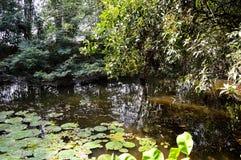 Lago nature in foresta Tailandia immagine stock libera da diritti