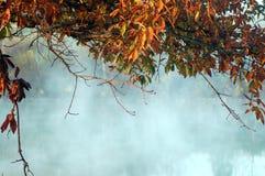Lago nebbioso del baldacchino frondoso fotografia stock