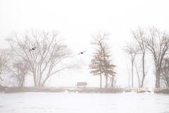 Lago nebbioso nell'inverno fotografie stock libere da diritti