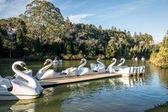Lago negersvart sjö med svanpedalfartyg - Gramado, Rio Grande do Sul, Brasilien Royaltyfria Bilder