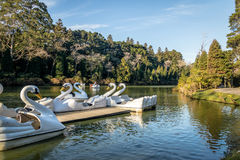 Lago Negro Black Lake With Swan Pedal Boats - Gramado, Rio Grande Do Sul, Brazil Royalty Free Stock Photos