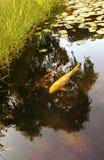 Lago nel giorno soleggiato fotografie stock