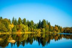 Lago nel legno Fotografia Stock Libera da Diritti