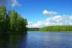 Lago nel legno Immagine Stock