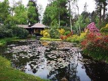 Lago nel legno immagini stock libere da diritti