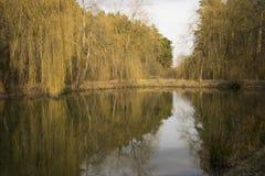 Lago nel parco Fotografie Stock