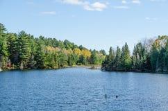Lago nel parco del Algonquin Immagini Stock Libere da Diritti