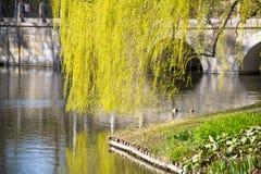 Lago nel parco di Chopin Varsavia Immagini Stock