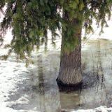 Lago nel parco di inverno immagine stock libera da diritti
