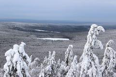 Lago nel terreno boscoso di inverno Immagini Stock
