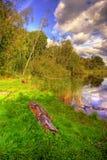Lago nella foresta Immagine Stock