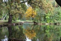Lago nella foresta in autunno fotografia stock