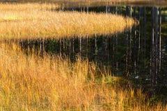 Lago nella foresta con erba Immagini Stock Libere da Diritti