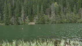 Lago nella foresta dell'abete stock footage