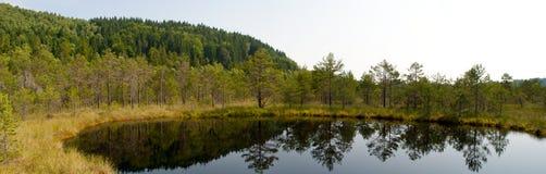 Lago nella palude Immagine Stock