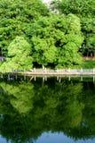 Lago nella sosta con gli alberi Immagine Stock Libera da Diritti