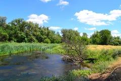 Lago nella steppa Fotografia Stock