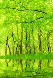 Lago nello sviluppo verde del hornbeam. fotografia stock libera da diritti