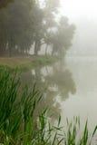 Lago nevoento na manhã Fotografia de Stock