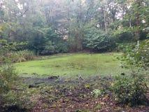 Lago no meio do Forrest Imagens de Stock