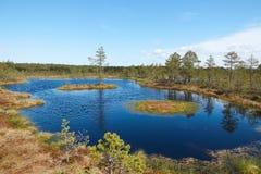 Lago no meio do pântano de Viru Raba em Estônia com duas areias movediças de flutuação pequenas com um pinho que cresce em um Foto de Stock Royalty Free