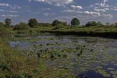 Lago no parque Fotografia de Stock Royalty Free
