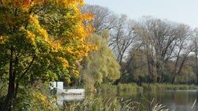 Lago no parque do outono vídeos de arquivo