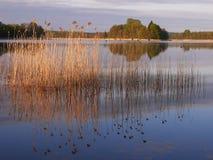 Lago no verão Imagem de Stock Royalty Free