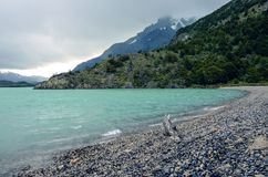 Lago Nordenskjold在托里斯del潘恩国家公园在智利,巴塔哥尼亚 库存图片
