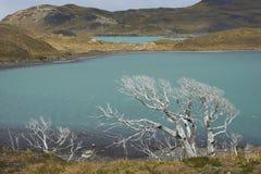 Lago Nordenskjold, parque nacional de Torres del Paine, o Chile Fotos de Stock