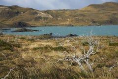 Lago Nordenskjold, parque nacional de Torres del Paine, o Chile Foto de Stock