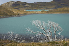 Lago Nordenskjold, Torres del Paine National πάρκο, Χιλή Στοκ Φωτογραφίες