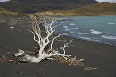 Lago Nordenskjold, Torres del Paine National Park, Chile Royalty Free Stock Image