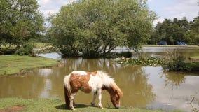 Lago nuevo Forest Hampshire England Reino Unido pony Janes Moor metrajes