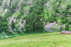 Lago Obersee, nau Konigssee, Baviera, Germania di Sch Grande paesaggio alpino con le mucche in parco nazionale Berchtesgaden immagini stock