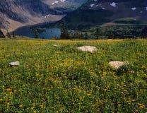 Lago ocultado antedicho del campo del Wildflower, Parque Nacional Glacier, Montana imagen de archivo libre de regalías