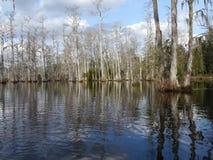 Lago ou pântano Imagens de Stock