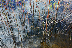 Lago overgrown con la reflexión del cielo Foto de archivo