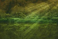 Lago pacifico della foresta con la riflessione verde degli alberi Fotografia Stock Libera da Diritti