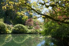 Lago pacifico nei giardini del butchart, in cespugli ed in alberi verdi, isola di Vancouver immagini stock libere da diritti