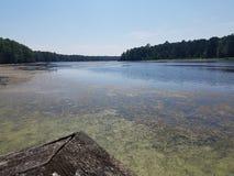 Lago paludoso Fotografia Stock Libera da Diritti