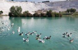 Lago in Pamukkale, Turchia Immagine Stock