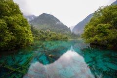 Lago panda del parco nazionale della valle di Jiuzhai Fotografia Stock