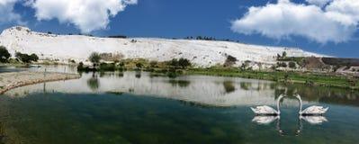 Lago panorámico de la montaña y cisnes cariñosos Fotos de archivo libres de regalías