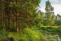 Lago pantanoso da floresta Foto de Stock