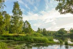 Lago pantanoso da floresta Fotos de Stock Royalty Free