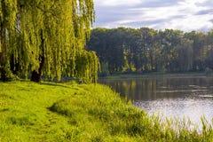 Lago in parco con gli alberi verdi ed acqua blu immagini stock libere da diritti